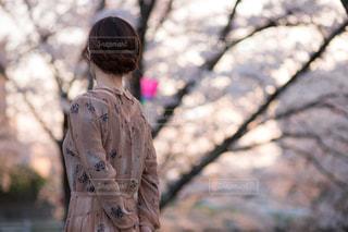 いざお花見の写真・画像素材[1315297]