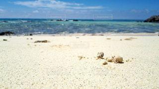 可愛いやどかりと美しい海の写真・画像素材[1315370]