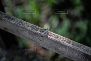 木製のベンチの上に座っている鳥の写真・画像素材[1320813]