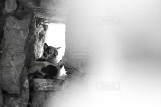カメラを見ている猫の写真・画像素材[1320988]