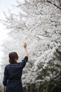 桜の中に立っている女性の写真・画像素材[1321010]