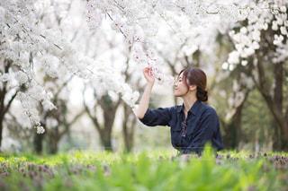 桜こんにちはの写真・画像素材[1321012]