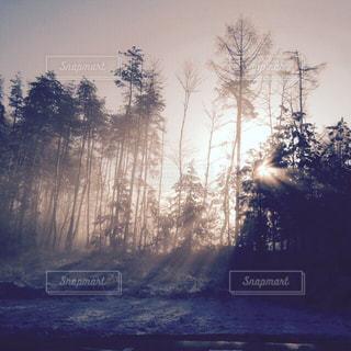 自然の写真・画像素材[530131]