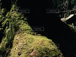 自然の写真・画像素材[530140]