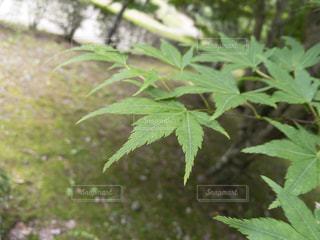 近くの緑の植物をの写真・画像素材[705916]
