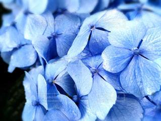 花の写真・画像素材[600447]