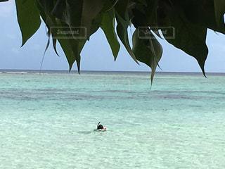グアム海の写真・画像素材[531657]