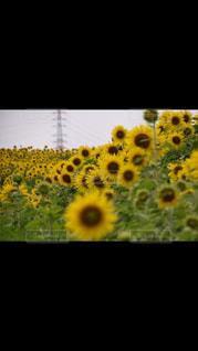 自然の写真・画像素材[531050]