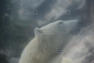 白の写真・画像素材[531078]