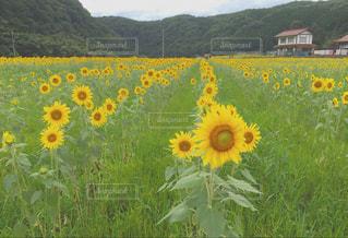花の写真・画像素材[535696]