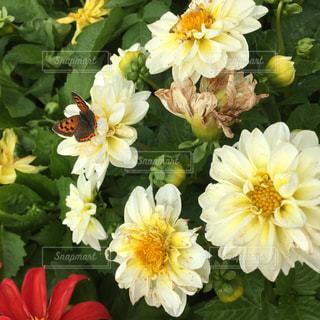 花の写真・画像素材[567121]