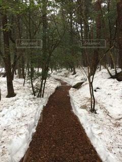 冬の写真・画像素材[53915]