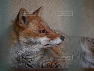 動物 - No.531300