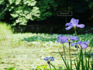 花の写真・画像素材[565087]