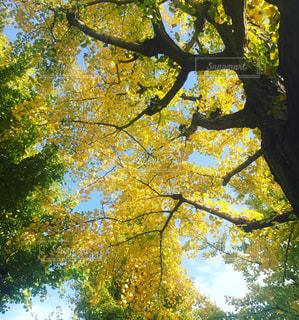 秋の写真・画像素材[538131]