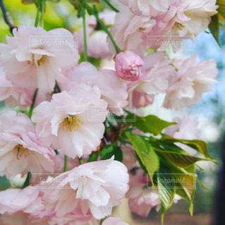 花の写真・画像素材[538146]