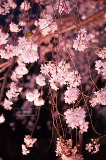 花の写真・画像素材[554141]