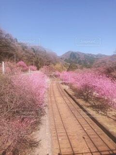 土の線路を下って行く列車の写真・画像素材[3822102]