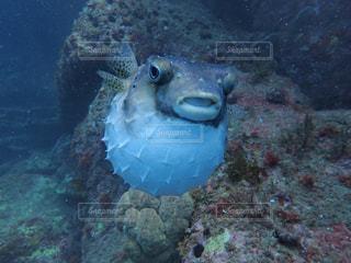 水面下を泳ぐ魚たちの写真・画像素材[820336]
