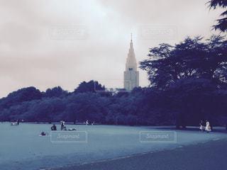 芝生の写真・画像素材[544750]