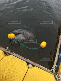 水の中に座っている黄色のボートの写真・画像素材[711700]