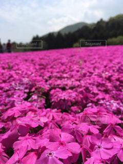花の写真・画像素材[532739]