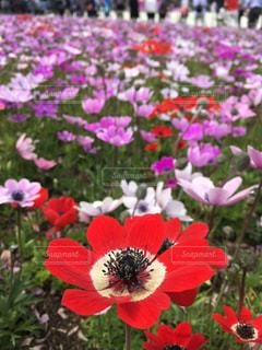 花の写真・画像素材[532744]