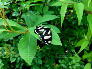 自然の写真・画像素材[535610]