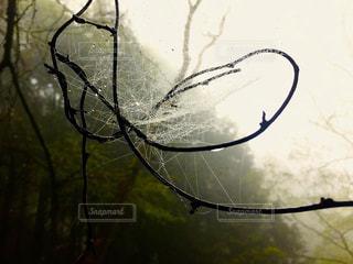 雨の写真・画像素材[539563]