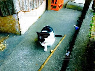 猫の写真・画像素材[539570]