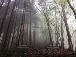 雨の写真・画像素材[539575]