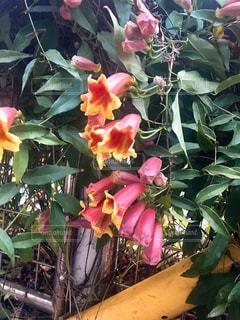 花の写真・画像素材[534223]