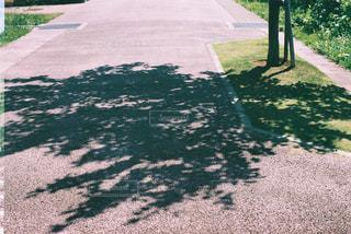 影の写真・画像素材[534384]