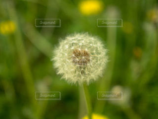 自然の写真・画像素材[543515]
