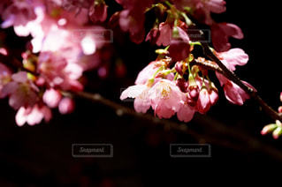 花の写真・画像素材[535051]