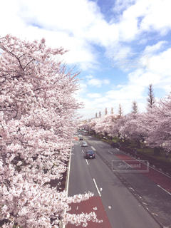 花の写真・画像素材[537204]