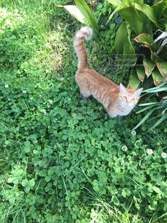 猫の写真・画像素材[535787]