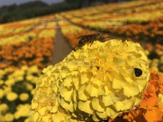 花の写真・画像素材[556163]