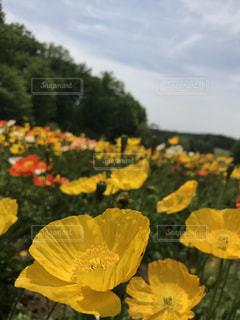 花畑の写真・画像素材[538934]