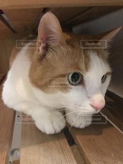 猫の写真・画像素材[550640]
