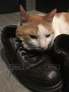 猫の写真・画像素材[552387]