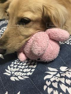 犬の写真・画像素材[555605]