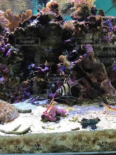 魚の写真・画像素材[555764]