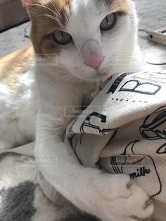 猫の写真・画像素材[556013]
