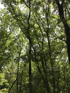 木の写真・画像素材[556033]