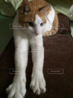 猫の写真・画像素材[561820]