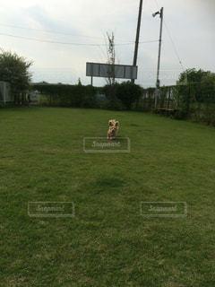 犬の写真・画像素材[562529]
