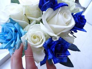 花の写真・画像素材[687181]