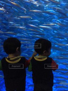 魚の写真・画像素材[536605]