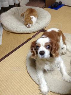 犬の写真・画像素材[553985]